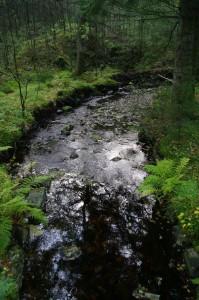 Litt for lite vann, men fin skogsbekk Foto:Karl Inge S