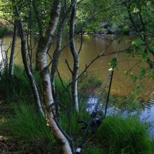 KArpefiske i skogen... Foto:Karl Inge S